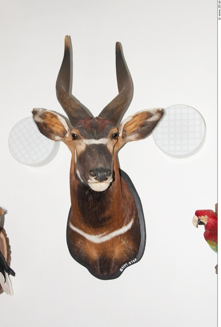 Photo of Antelope