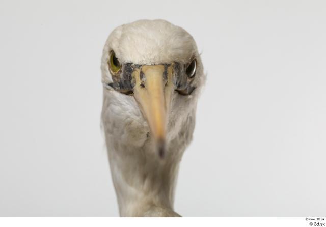 Head Animal photo references