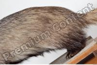 Badger body photo reference 0011