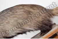 Badger body photo reference 0012