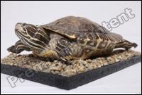Turtle # 6