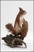 Squirrel # 2