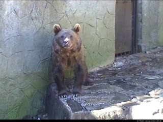 Bear (movie)